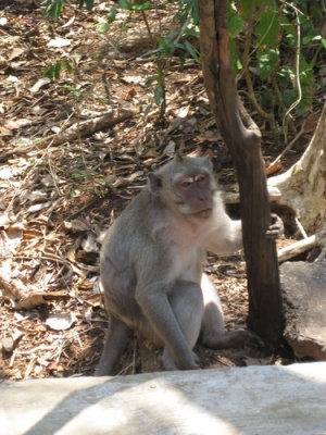 monkey_at_Uluwatu_Temple_
