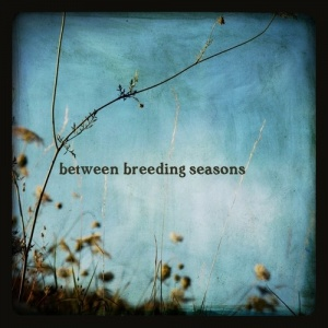 Between_Breeding_Seasons_CD_cover