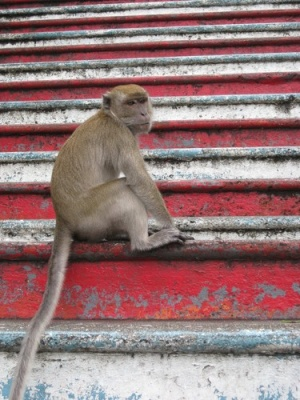 monkey_at_Batu_Caves