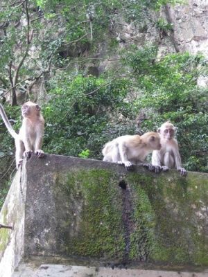 three_monkeys_at_Batu_Caves