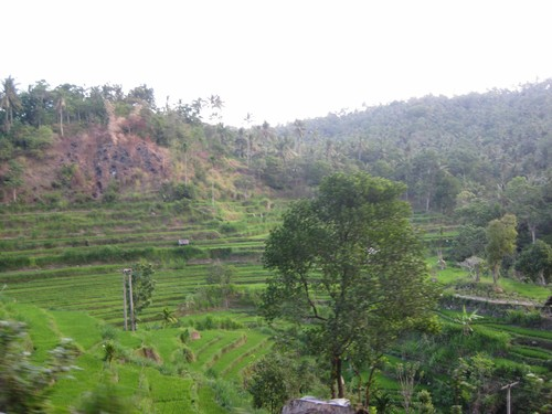 rice_fields_Tirta_Gangga_3