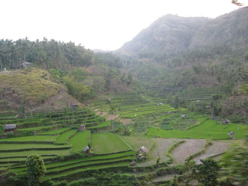 rice_fields_Tirta_Gangga_4