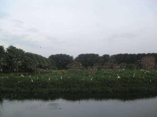 so_many_cranes_at_Maha_Vihara_Maitreya_Medan