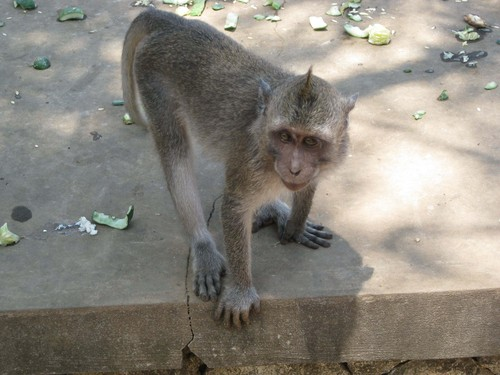 baby_monkey_at_Uluwatu_Temple