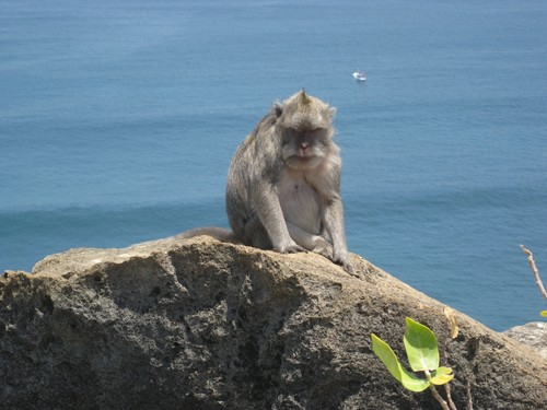 monkey_in_charge_at_Uluwatu_Temple