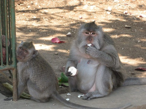 monkeys_at_Uluwatu_Temple