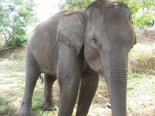another_elephant_at_Taman_Nasional_Way_Kambas