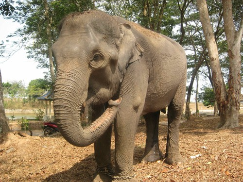 elephant_at_Taman_Nasional_Way_Kambas