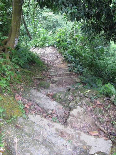 path_at_Gunung_Leuser_National_Park