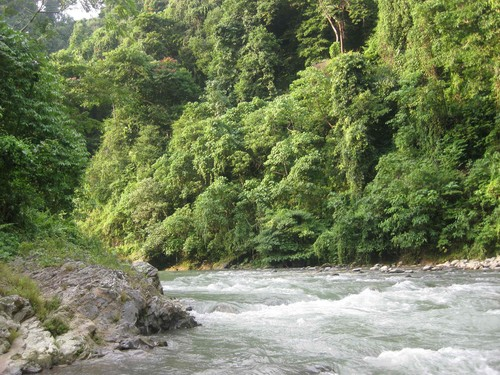 river_near_at_Gunung_Leuser_National_Park