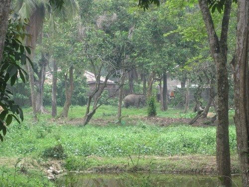 elephant_in_Palembang