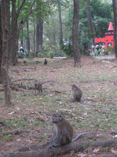 monkeys_in_Palembang_2