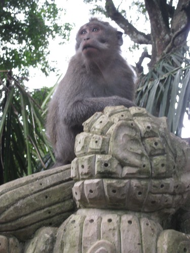 Monkey_at_Monkey_forest