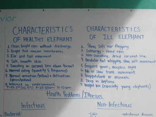 Elephant_Characteristics_at_Elephant_Nature_Park