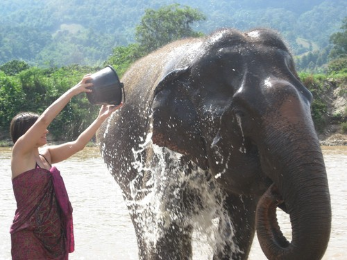 LC_washing_elephant_at_Elephant_Nature_Park