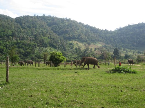 elephants_and_view_at_Elephant_Nature_Park