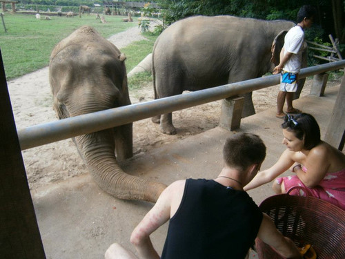 feeding_elephants_by_Billie