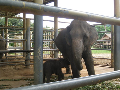 lets_play_Mum_at_Elephant_Nature_Park