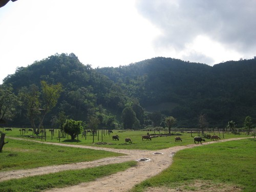 mountain_view_at_Elephant_Nature_Park