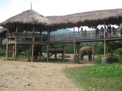 overpass_at_Elephant_Nature_Park