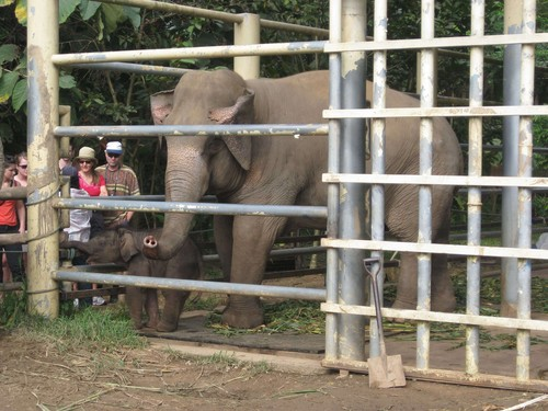 quarantine_area_at_Elephant_Nature_Park