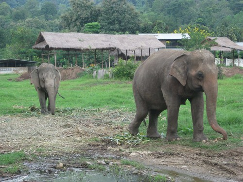 two_elephants_at_Elephant_Nature_Park
