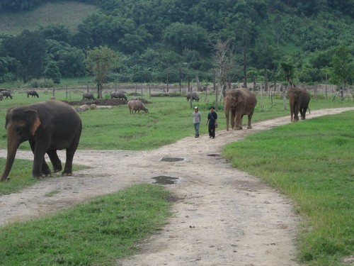 walking_at_Elephant_Nature_Park
