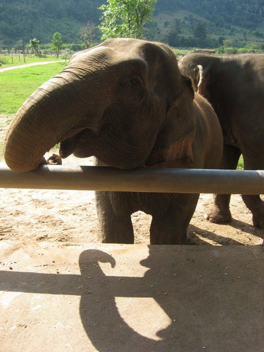 whats_for_lunch_at_Elephant_Nature_Park