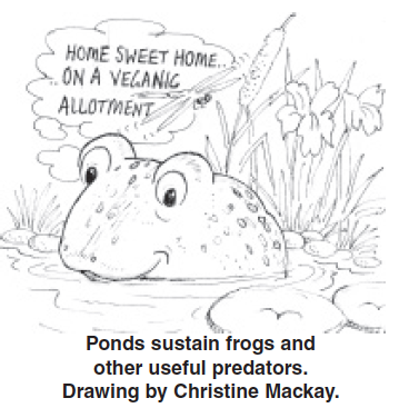 frog_in_pond_drawing