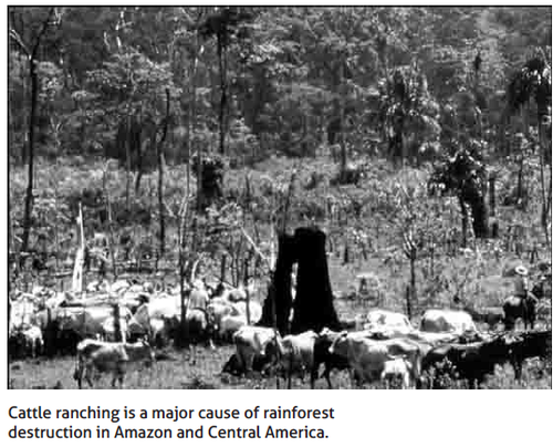 Cattle_Ranching