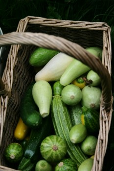 s.Gourds_green