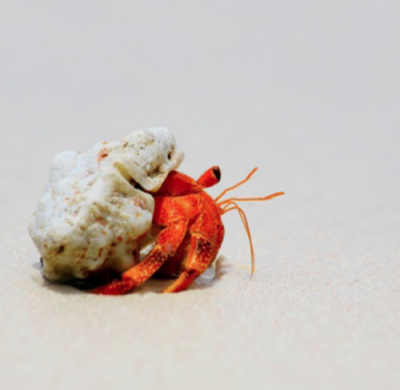 Hermie_by_Alex_Cearns