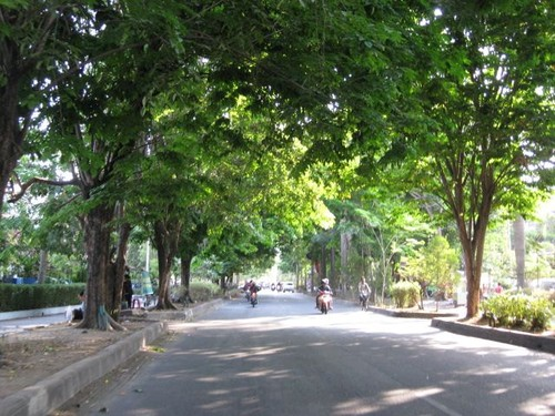 becak_and_tree_view