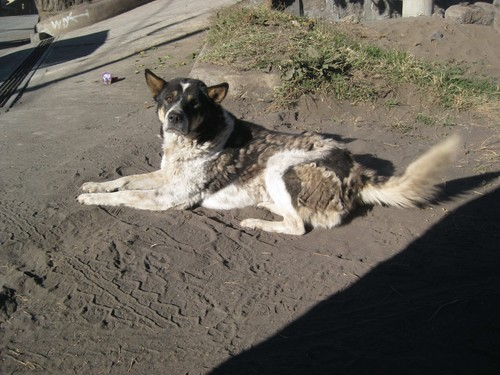 dog_friend_Bromo