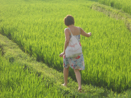 LC_walking_on_the_rice_fields
