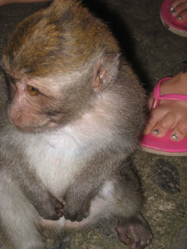 baby_monkey_and_LCs_thongs_at_monkey_forest