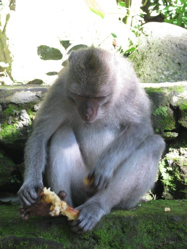 food_for_monkeys_at_monkey_forest