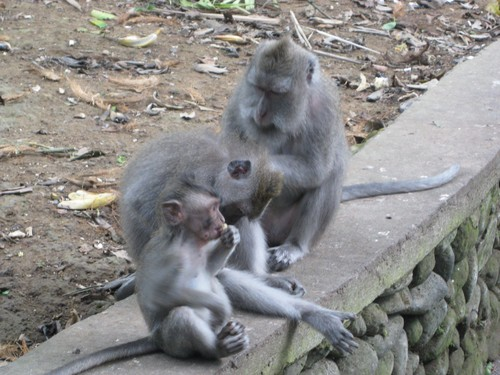 monkies_at_monkey_forest