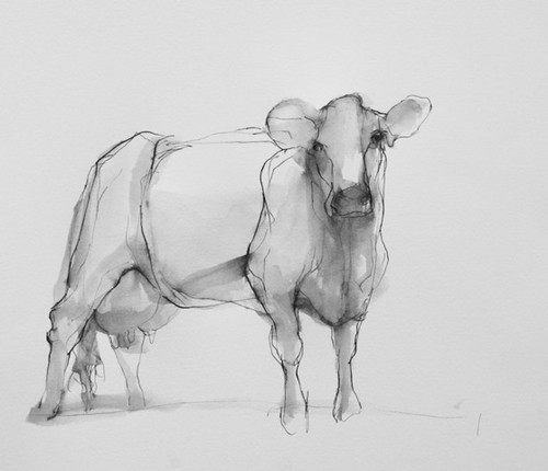 susan_siegel_cow