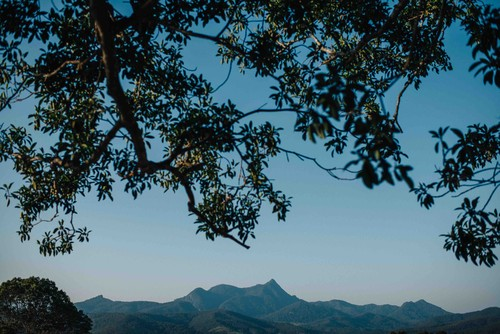 The_view_from_under_the_fig_towards_Mt_Warning